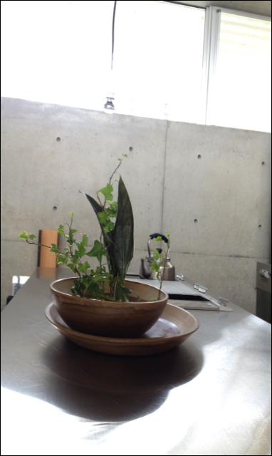 植物 植栽 飾る