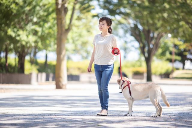 紫外線05 犬の散歩